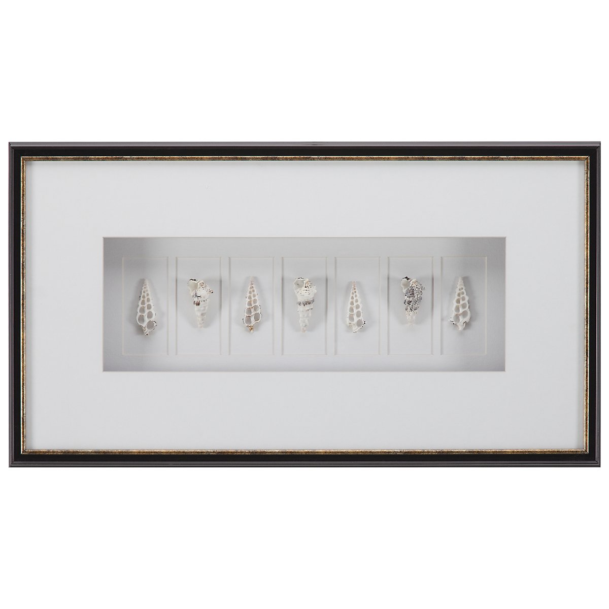 Shell Coll1 Shadowbox
