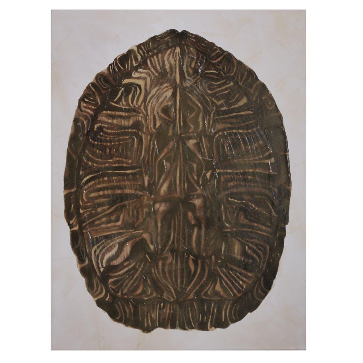 Tortoise Brown Wall Art