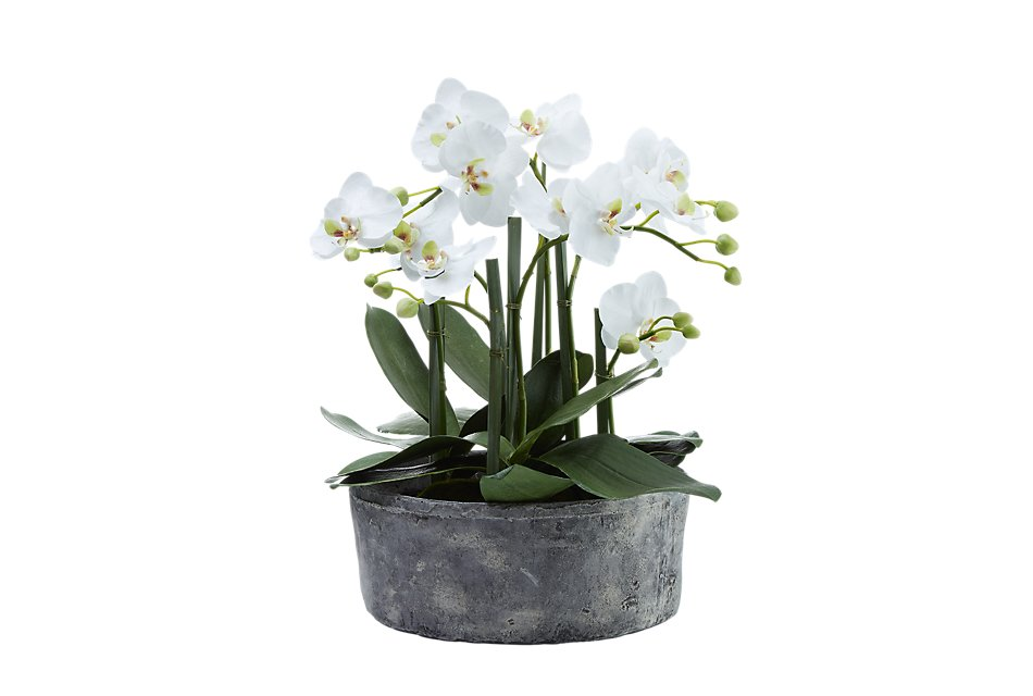 """Phalaenopsis In Narrow Pot White 19"""" Orchid"""