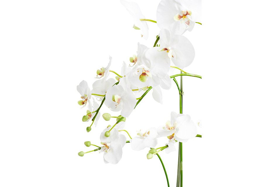 """Phalaenopsis In Narrow Pot White 37"""" Orchid"""