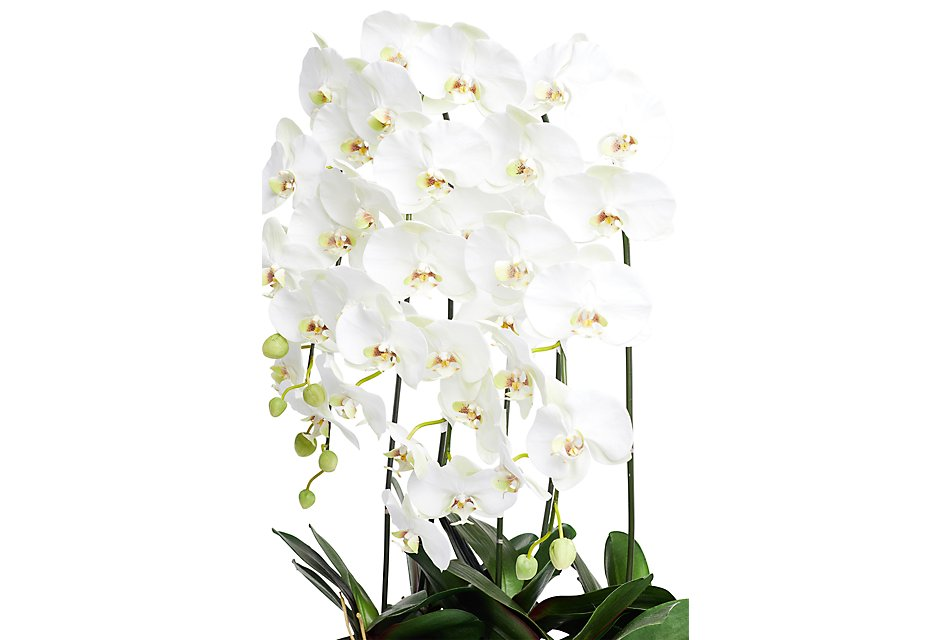 """Phalaenopsis In Narrow Pot White 42"""" Orchid"""